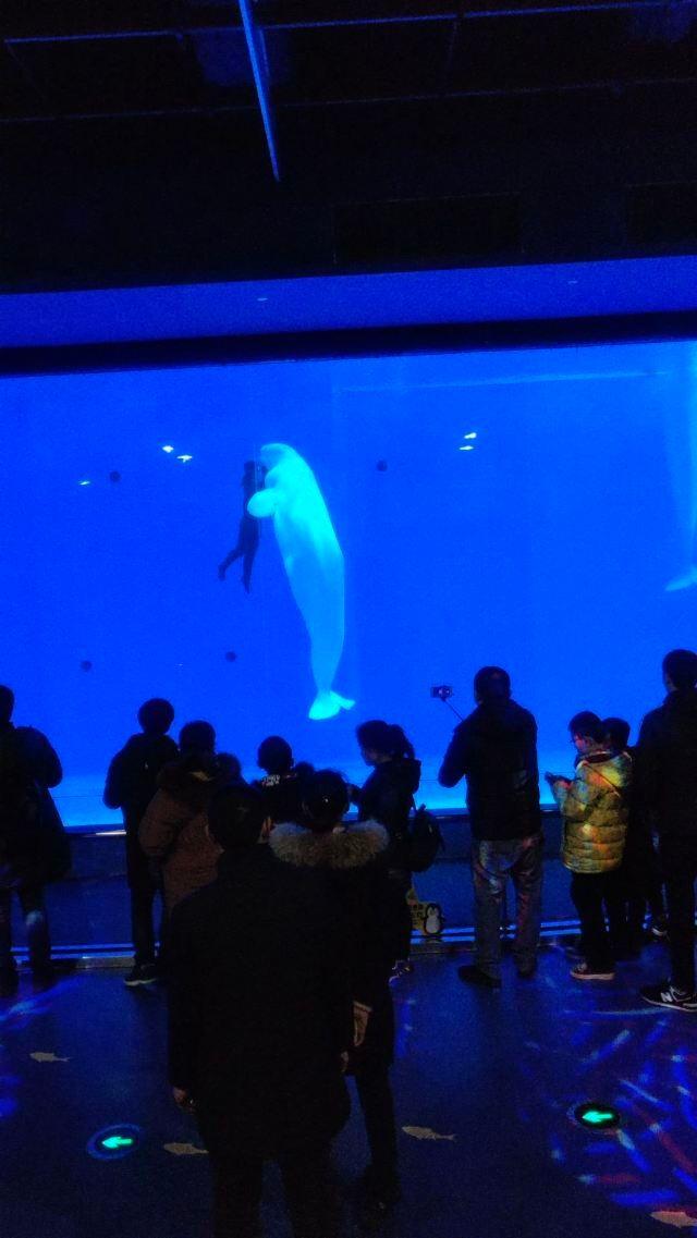 淮安龍宮大白鯨