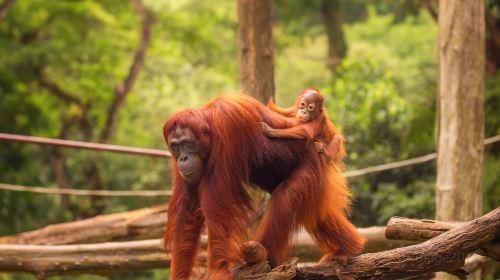 싱가포르 동물원