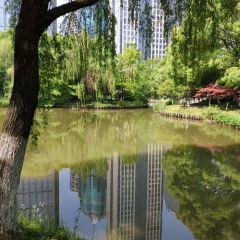 杭州森林公園用戶圖片