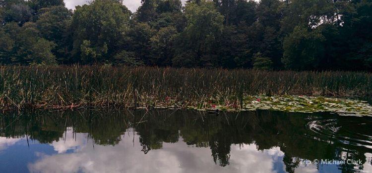 Lake Te Koutu1