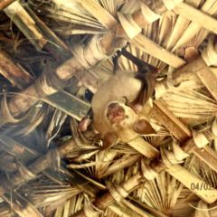 Kirindy Forest Morondava Madagascar User Photo