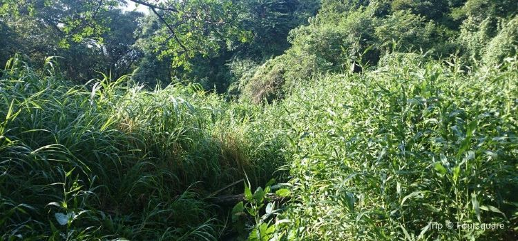 Amanzimtoti Bird Sanctuary1