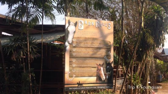 Phuket International Horse Club