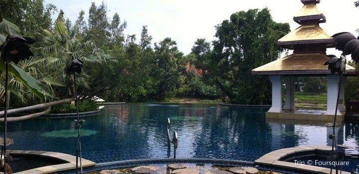 Swimming Pool beside Rice field1