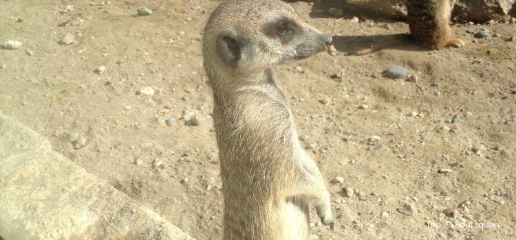 Limassol Zoo2