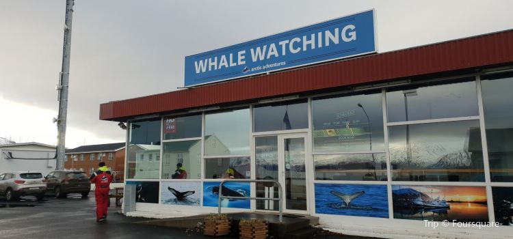 Arctic Sea Tours Whale Watching