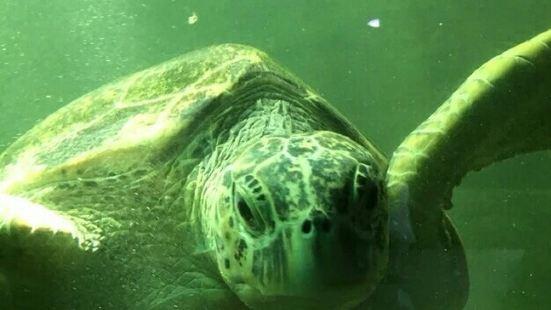 西寧野生動物園海洋館