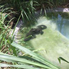 Langkawi Wildlife Park User Photo