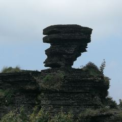 蘑菇石用戶圖片
