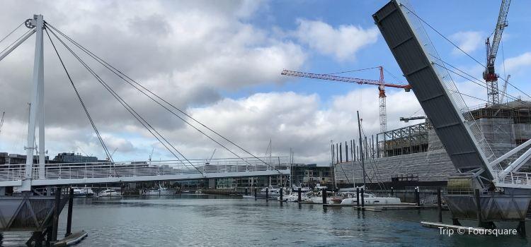 Auckland Whale & Dolphin Tour2