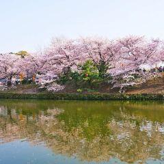 鶴崗國家森林公園用戶圖片
