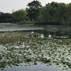멍지아 공원 여행 사진