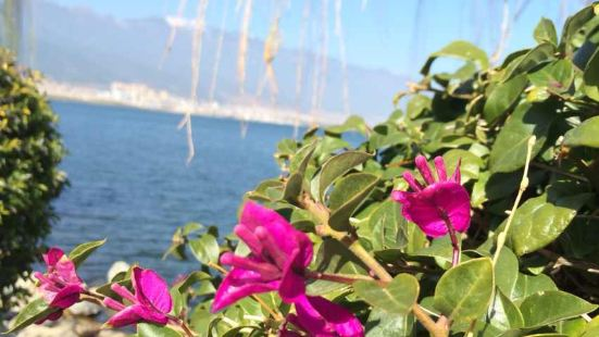 大理洱海魚莊