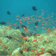 Pulau Payar Marine Park User Photo
