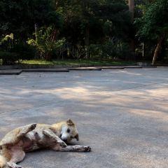 Wat Yansangwararam User Photo