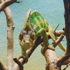 RZSS 에든버러 동물원 여행 사진