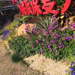 南通園藝博覽園用戶圖片