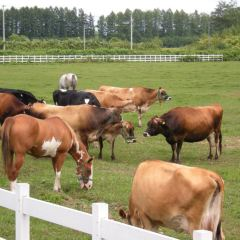 Tokachi Ranch User Photo