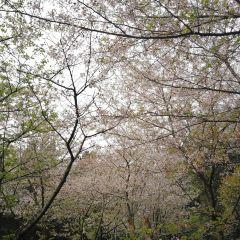 우한대학(무한대학) 여행 사진