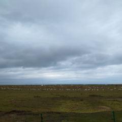 Hudong Sheep Breeding Farm User Photo