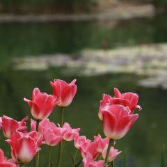 Weifang Botanical Garden User Photo