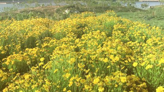 Xiaofuhe Wetland Park