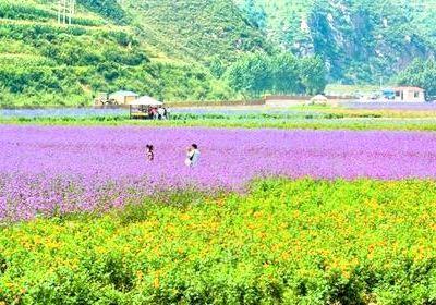 Miyun Renjian Flower Ocean Lavender Manor