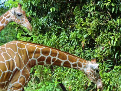 德希烏拉動物園