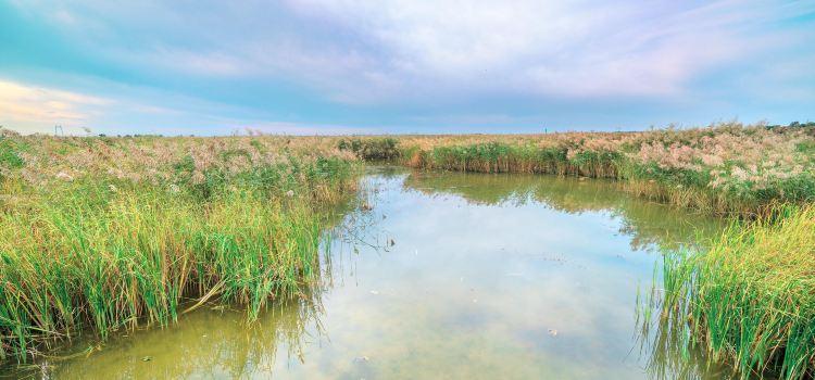 Longfeng Wetland