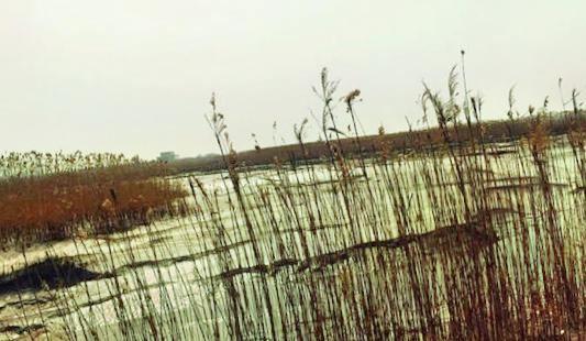 玉林濕地公園