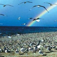 青海湖鳥島用戶圖片