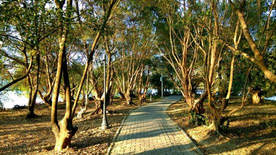 Jiaoshiling Forest Park