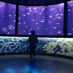 Sea Life Nagoya User Photo