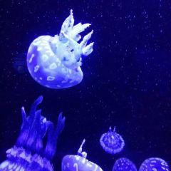 칭다오 해저세계/언더워터월드 여행 사진