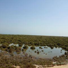 Al Dakhira Natural Reserves用戶圖片