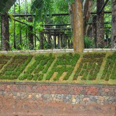 Hainan Tianya Tropical Rainforest Museum User Photo