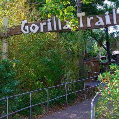 Dallas Zoo User Photo