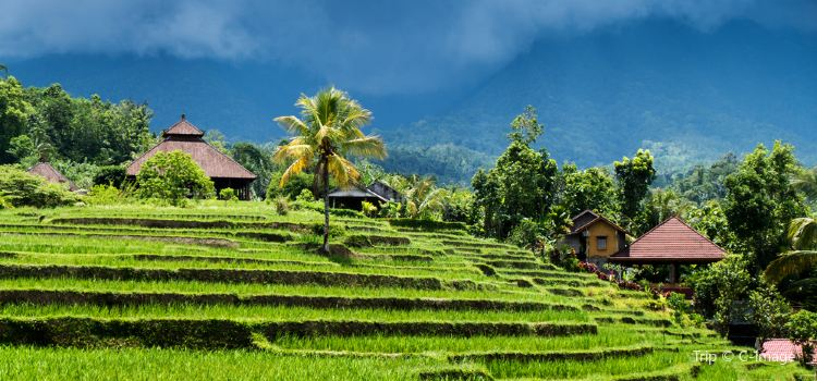 Jatiluwih Rice Terraces | Tickets, Deals, Reviews, Family