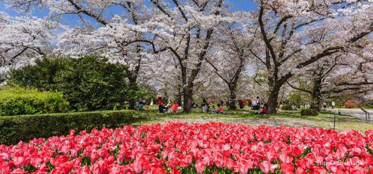 京都府立植物園2