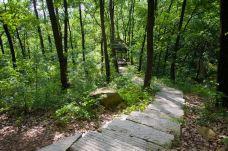 白竹园寺国家森林公园-枣阳-SUN12999