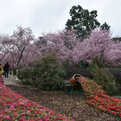 청두 식물원 여행 사진