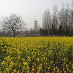 Dongshan Cultural Arts Park User Photo
