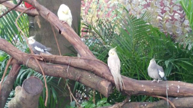 Chimelong Bird Park