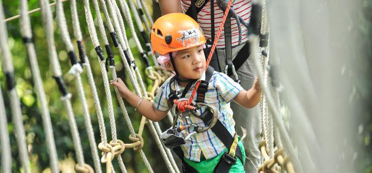 Sky Line Adventure Jungle Leap