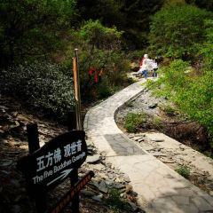 진롱쓰 국가삼림공원 여행 사진