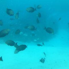 美人魚號觀光潛水艇用戶圖片