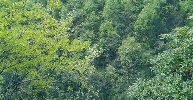 錐子山森林公園