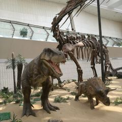 Tianjin Natural History Museum User Photo