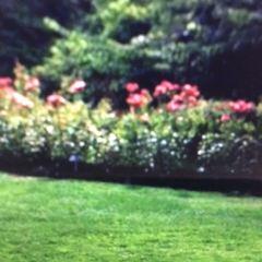 康沃爾公園用戶圖片
