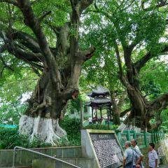 Fenghuangshan Park User Photo